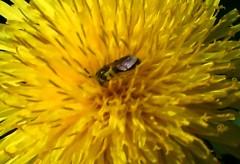 Insectes Divers Qui Butinent